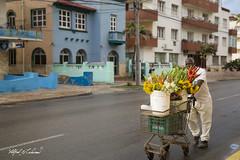Morning Commute_MG_5515 (Alfred J. Lockwood Photography) Tags: alfredjlockwood travelphotography streetphotography streetportrait flowervendor walking cuba havana cuban spring morning flowers