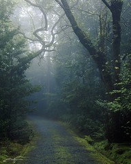 On the path (jorgeverdasca) Tags: goth path woodland forest nature sintra portugal