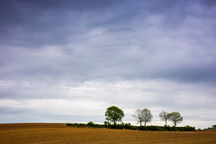 Four in a row (ulbespaans) Tags: landscape landscapephotography minimal minimalism minimalismart minimalistic trees sky agriculture agricultureworldwide agricultura agricultureglobal lessismore lessismoreoutdoors less