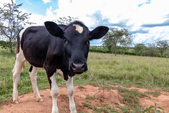 Field visits to Kiruhura District, Uganda on 2nd May 2019 by the team implementing the Program for Climate-Smart Livestock systems (PCSL). (International Livestock Research Institute) Tags: pcsl uganda climatesmartagriculture climatesmart livestock