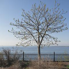 Leif Erikson Park, Duluth 5/16/19 #tree #spring (Sharon Mollerus) Tags: duluth mn cfptig19