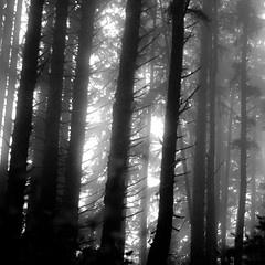 Forest In Fog 013 (noahbw) Tags: d5000 ecolastatepark nikon oregon pnw pacificnorthwest abstract blackwhite blackandwhite branches bw dark darkness dreamlike dreamy fog foggy forest landscape light lowlight mist misty monochrome natural noahbw quiet silhouette spring square still stillness treetrunk trees woods