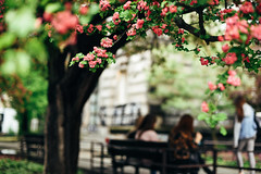 Spring Fever (ewitsoe) Tags: city nikond750 spring street warszawa erikwitsoe urban warsaw tree women sitting bench flower flowering bloom bokeh people girls impression dof