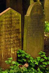Saint James Gardens and cemetery, Liverpool. (Blaise Olivier) Tags: liverpool merseyside ville city unitedkingdom england treesquirrel cimetière cemetery tomb tombe écureuil