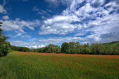 _IMG1377 (polipao) Tags: campi field papaveri cielo sky nuvole clouds natura nature country relaxing quiet peace alberi trees montefeltro marche ilobsterit campagna poppies