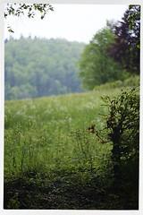 Shirley 1926-2019 R.I.P. 14 (John Teulon Ladd) Tags: schwarzwald shirley helios44m458mmf2 fujixt10 blackforest