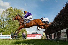 Race 7 BONUS - Catwalk Frank (JTW Equine Images) Tags: p2p point pointtopoint knutsford cheshire tabley nh racing horse equine jockey trainer jumps