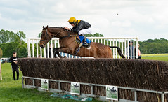 Race 6 - Rules Of War-6 (JTW Equine Images) Tags: p2p point pointtopoint knutsford cheshire tabley nh racing horse equine jockey trainer jumps