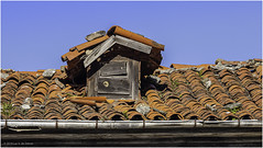Dormer window (Luc V. de Zeeuw) Tags: decay dormer dormerwindow fern growing gutter old roof window tineo asturias spain