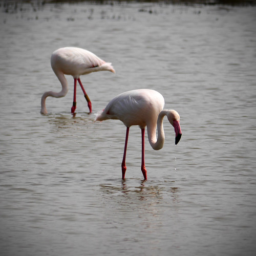 190414_flamingo-3