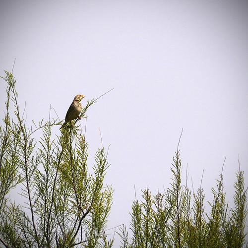 190414_kleinvogeltje