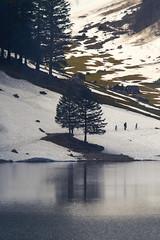 Tree reflection (Churrumburru) Tags: dramatic vintage trekking classic tele trees lake snow alps