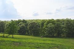 Chestnut Picnic (The Hobbit Hole) Tags: trees parkvienna 2470mm40s chestnutaustria nikon austria nikonz lainzertiergarten green vienna hietzing wien wienerewald