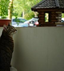 Katze auf Balkon (Sascha Klauer) Tags: animals balcony balkon birdhouse cat deutschland erfurt germany ilce7 katze sonya7 sonyalpha7 sonyilce7 strase tiere unschärfe vogelhaus vogelhäuschen