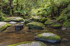 Near Erskine Falls 2019-05-16 (5D_32A4831) (ajhaysom) Tags: erskinefalls lorne otwayranges canoneos5dmkiii canon24105l australia river ferns 100xthe2019edition 100x2019 image39100