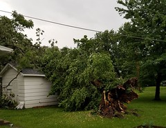 Storm Damage (tomcomjr) Tags: samsung galaxy s7 storm damage tree garage uprooted