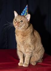 Happy 11th Birthday Fellini (Jersey JJ) Tags: fellini happy birthday 11 years old 11th portrait pointy party hat