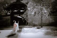 Maiko_20190409_121_21 (Maiko & Geiko) Tags: 20190409 myokenji temple kanohisa kyoto maiko 舞妓 妙顕寺 叶久 京都 叶家 kanoya ksumika
