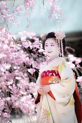 Maiko_20190409_121_23 (Maiko & Geiko) Tags: 20190409 myokenji temple kanohisa kyoto maiko 舞妓 妙顕寺 叶久 京都 叶家 kanoya ksumika