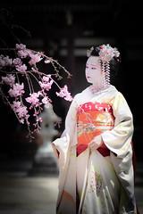 Maiko_20190409_121_30 (Maiko & Geiko) Tags: 20190409 myokenji temple kanohisa kyoto maiko 舞妓 妙顕寺 叶久 京都 叶家 kanoya ksumika