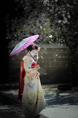 Maiko_20190409_121_32 (Maiko & Geiko) Tags: 20190409 myokenji temple kanohisa kyoto maiko 舞妓 妙顕寺 叶久 京都 叶家 kanoya ksumika