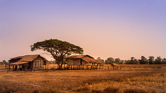 Si Phan Don (4000 islands), Laos (pas le matin) Tags: travel voyage world asia asie southeast southeastasia lao laos landscape tree paysage rizière rice ricefield arbre house 4000islands maison 4000îles siphandon canon 7d canon7d canoneos7d eos7d