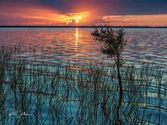 Sunrise on the lake (Trojan Wonder) Tags: lake sunrise water florida grass tree sun clouds sky plants