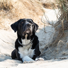 Who let the dogs out? (Maurice Tiggeler for Blue Jam Photography) Tags: familieportretten dog hond beach strand