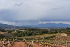 Camps de Cal Bord (esta_ahi) Tags: santmartísarroca penedès barcelona spain españa испания vinya viña viñedo vineyard vitisvinifera calbord montserrat cel cielo sky núvols nubes clouds
