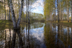 in the rhythm of spring (Sergey S Ponomarev) Tags: sergeysponomarev canon eos 70d efs1018f4556isstm natura nature paesaggio landscape paysage landschaft spring primavera kirov vyatka russia russie russland north nord forest alley birch hdr highdynamicrange water reflections clouds sky riflessi woods сергейпономарев природа киров вятка россия весна пейзаж деревья лес вода половодье flood greenery may maggio облака небо отражения