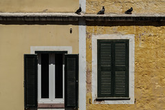 Perching pigeons (PChamaeleoMH) Tags: abstract birds ciutadella colours columbidae fauna menorca pigeons shutters textures walls