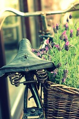 bike with lavender basket (Jackal1) Tags: bike lavender herbs basket saddle decay bicycle retro