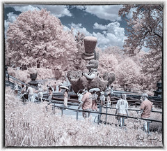 Mad Hatter Visitors (4 Pete Seek) Tags: atlanta atlantageorgia atl atlantabotanicalgardens urban urbanphotography infrared infraredconvertedcamera lifepixels supercolorinfrared 590nm touit32 zeisstouit touit1832 planar3218touit street streetphotography