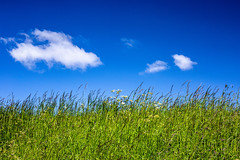 Spring (ulbespaans) Tags: minimal minimalism minimalistic minimalismart blue bluesky landscape landscapephotography lessismore lessismoreoutdoors less flowers sky grass