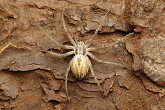 IMG_0011 (Ondřej Michálek) Tags: spider