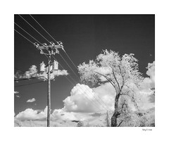 Skyline (agianelo) Tags: overhead power line tree cloud infrared ir monochrome bw bn blackandwhite