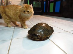 Cat and Cooter (Mandy_moon) Tags: 2019 turtle cooter