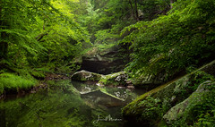 Soooo Much Green (Wits End Photography) Tags: color shawnee green nature reflection stream illinois shawneenationalforest water woods statepark southernillinois brook creek ditch river trickle