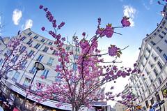 542 Paris en Mars 2019 - en bas de la rue de Ménilmontant (paspog) Tags: paris france mars march märz 2019 fleurs flowers blossoms blumen rueoberkampf ruedeménilmontant