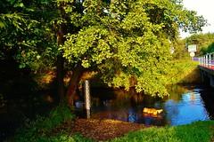 2012-10-02 Loryniec (139) (aknad0) Tags: polska loryniec wda krajobraz rzeki drzewa most