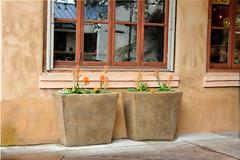Matching Flowers (Steven P. Moreno) Tags: calistoga california usa pacifico stevenpmoreno pottedplanter flowers stevenmorenospix2019 napacounty business nikond7100