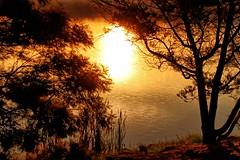 Golden pond. (Ian Ramsay Photographics) Tags: springfarm newsouthwales australia serenity golden pond lake water filteredlight yellow sunset afternoon light trees rays enhanced