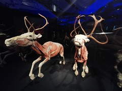 Animals Inside Out - Manitoba Museum of Man and Nature (TheSamuelYears) Tags: animalsinsideout touringexhibit animal animals museum winnipeg wpg canada manitobamuseumofmanandnature manitobamuseum manitoba indoors indoor huawei huaweip30pro exhibit deer