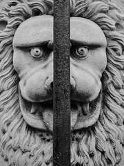 Lion in Bruges Belgium - B&W (goldenagetrips) Tags: lion bruges belgium