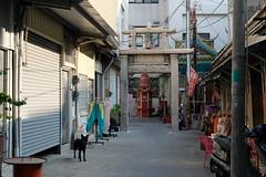 (冰冷熱帶魚) Tags: fujifilm xpro2 xf35mm digital street snap streetphoto taiwan tainan urban