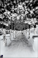 Brussel (Dr. Ernst Strasser) Tags: ifttt 500px brussel luc v lensbaby park sweet 35 trees belgium outdoors selective focus tree symmetry long exposure leaves bush patch speed direction in a row nobody black and white ernst strasser unternehmen startups entrepreneurs unternehmertum strategie investment shareholding mergers acquisitions transaktionen fusionen unternehmenskäufe fremdfinanzierte übernahmen outsourcing unternehmenskooperationen unternehmensberater corporate finance strategic management betriebsübergabe betriebsnachfolge