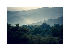 Green (sdrusna79) Tags: landscape green bosco tree