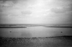 Echo Gulls (selyfriday) Tags: olympusxa1 olympus xa1 believeinfilm filmisnotdead analogue film 35mm rodinal 125 20˙c 75minutes kentmere400 kentmere nederland netherlands dutch holland