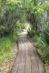 Boardwalk on the Bayou (Zach Hawn) Tags: gulfcoast ussouth south southernus gulfofmexico wildlife animals nature naturenerd outdoors biodiversity gulfstates naturalist baratariapreserve jeanlafittenationalhistoricalpark nationalpark nps louisiana wildlifepreserve wildliferefuge travel nationalparksservice