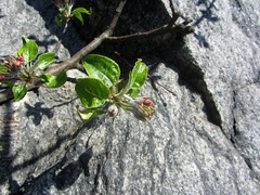 fotö (helena.e) Tags: helenae fotö påsk husbil rv motorhome älsa flower blomma macro